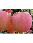 Яблоня Фуджи в Грозном